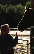 trust horse