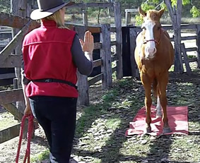 Q&A – Can I Use Tricks to Teach My Horse to Stand Still?