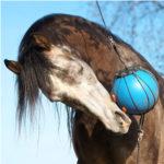 horse play ball