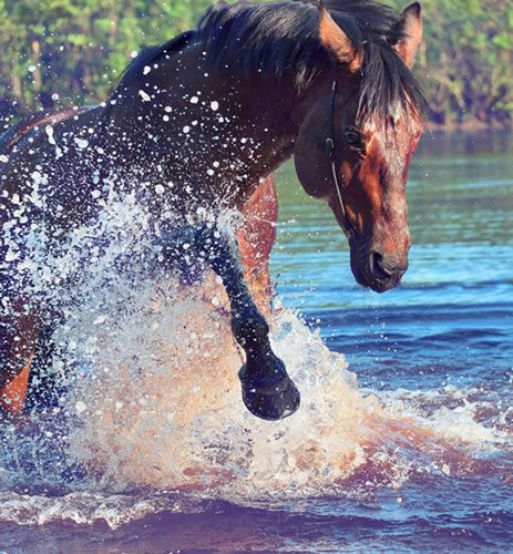 31 Things To Do With Your Horse (other than riding) | Horse Tricks 101